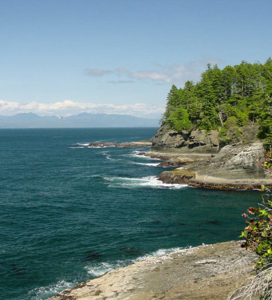 shoreline of trees and rocks with mountains in background